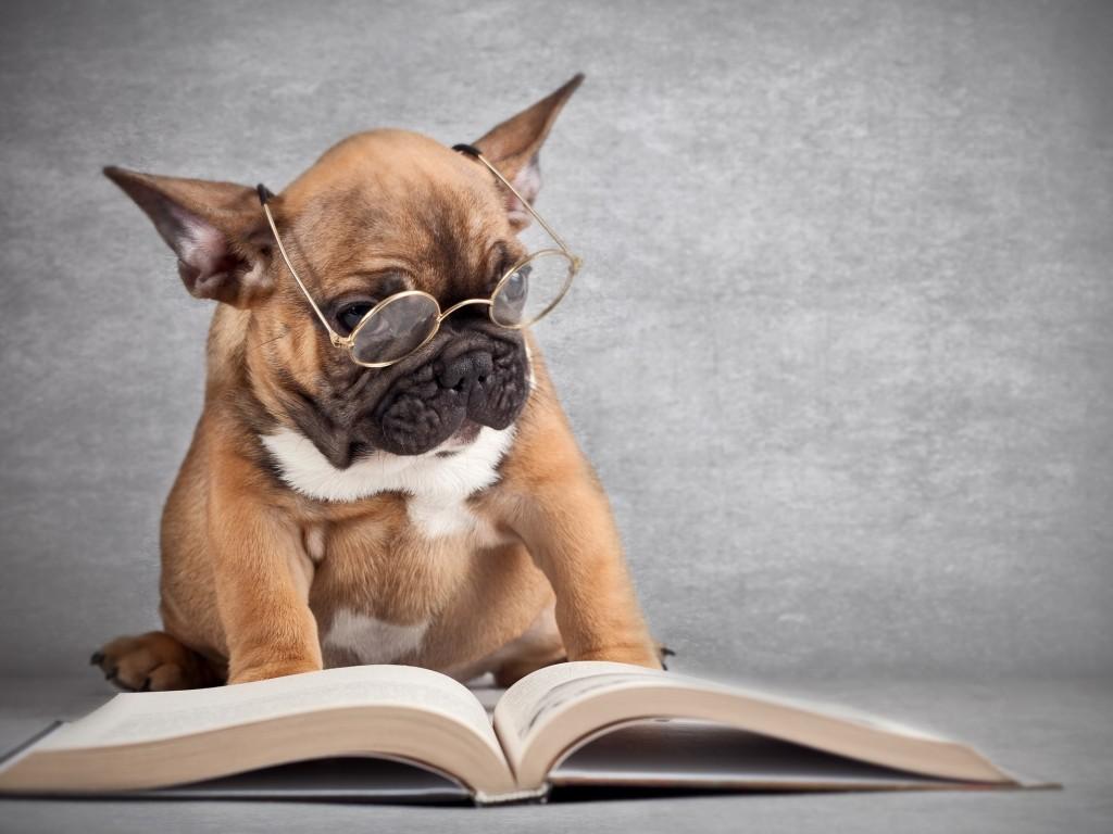 Картинки по запросу Закон и собака